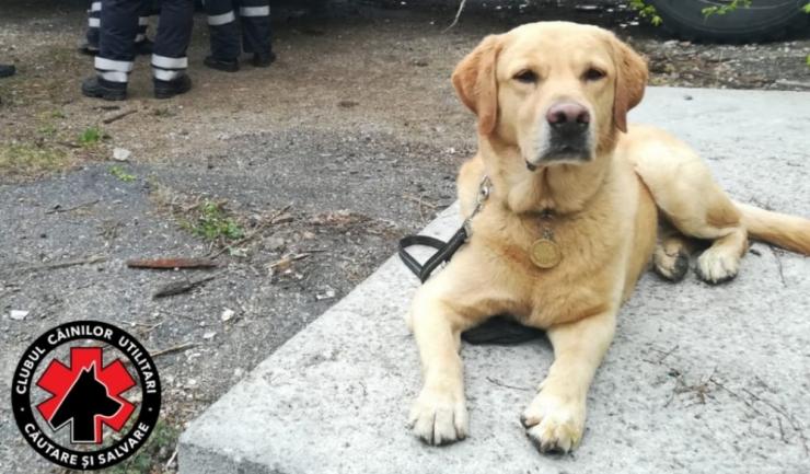 Labradorul Billy
