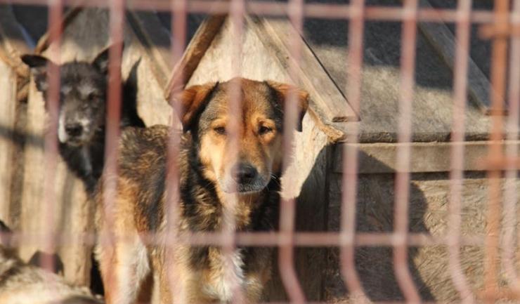 Niciun ONG protestatar nu s-a grăbit să ajute câinii din Biobaza Constanța. Totuși, activiștii nu s-au sfiit să acuze și să amenințe.