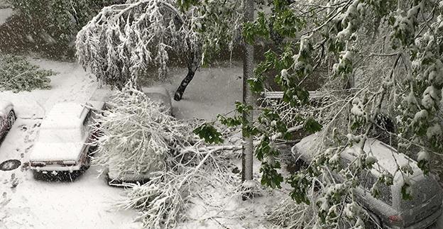 Autovehiculele avariate de căderea accidentală a copacilor înghețați pot fi reparate cu polița facultativă CASCO