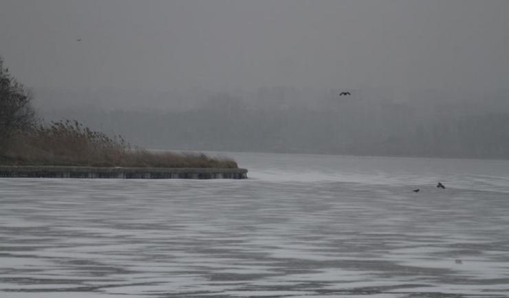 Lacul Tăbăcărie a înghețat, transformându-se într-un patinoar pentru păsări