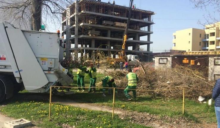 În stațiunea Mamaia, muncitorii au început să toaleteze arbori, să tundă iarba și să curețe spațiile verzi