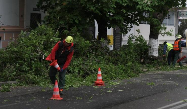 Pe strada I.G. Duca, în zona Administrației Județene a Finanțelor Publice, o creangă s-a rupt și a căzut peste firele de electricitate