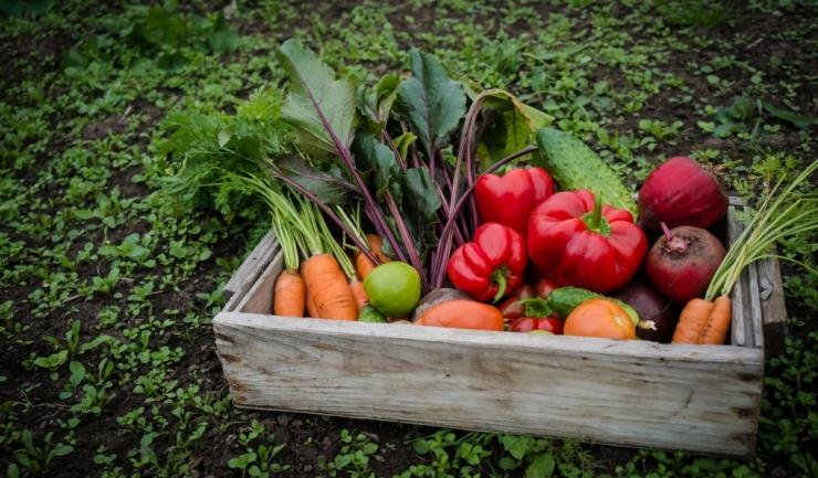 Nu ştii să faci agricultură ecologică? Te învaţă CCINA! Hai la curs!