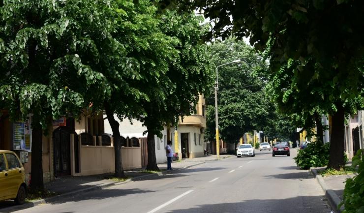 De marți, 21 mai, până joi, 24 mai, Primăria Constanța va toaleta copacii de pe strada Mihai Viteazu