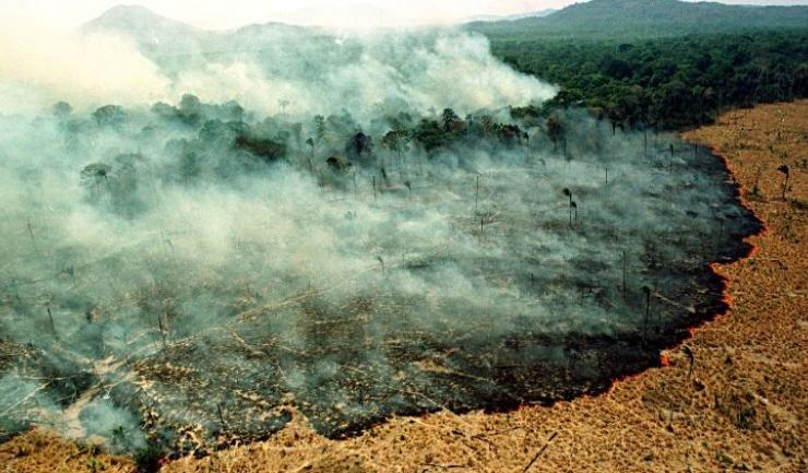 Între ianuarie și august 2019, în Brazilia s-au înregistrat peste 72.800 de incendii de pădure