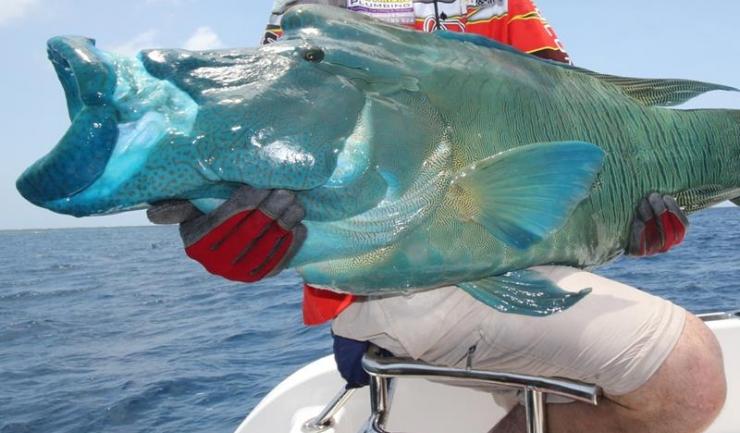 ALERTĂ MONIDIALĂ! Acest peşte protejează reciful şi este pe cale de dispariţie!