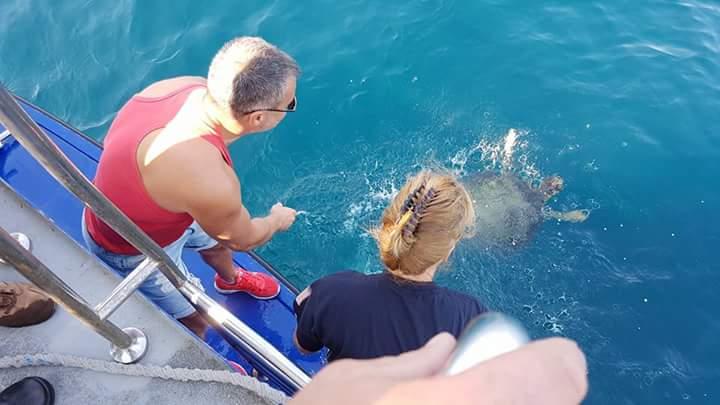 """Țestoasa din specia """"Caretta Caretta"""" a fost eliberată în largul Mării Negre (sursa: Facebook Adrian Bîlbă)"""