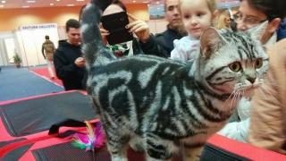Sâmbătă şi duminică, la Vivo! se va desfăşura Expoziţia Felină de Toamnă