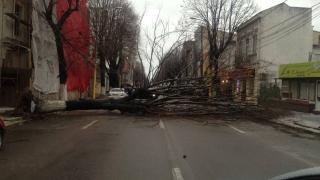 Copac doborât de vânt pe bulevardul Tomis