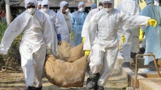 Germania și Elveția au raportat noi cazuri de gripă aviară