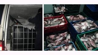 Peste 600 kg de peşte fără documente legale, confiscate de poliţiştii de frontieră