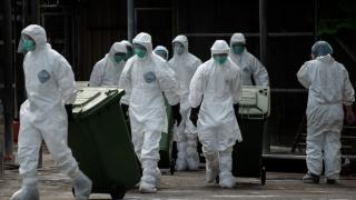 Peste 100.000 de păsări au fost sacrificate în Germania din cauza gripei aviare
