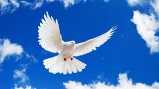 Pe 21 septembrie este celebrată Ziua Internaţională a Păcii