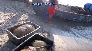 Acțiune în forță pe Marea Neagră și în Deltă! Braconieri capturați!