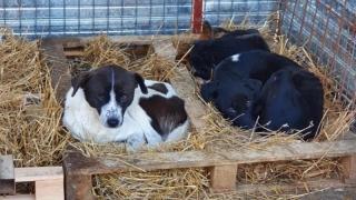 Pregătiri de iarnă la Adăpostul pentru animale fără stăpân