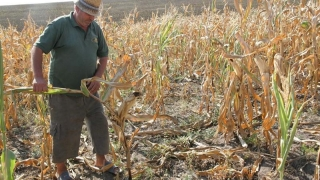 Adeverinţe de la APIA pentru agricultori! Care sunt băncile cu care s-au încheiat convenţii
