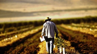 Agricultorii din cooperații, scutiți de unele taxe și impozite