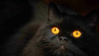 Ai visat pisici? Ce înseamnă asta?