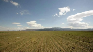 Plafoanele pentru sectorul vegetal, aprobate