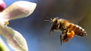 Albina, exclusă din Legea Zootehniei! Cum este posibil aşa ceva