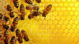 Semnal de alarmă!  Dispariția insectelor ne afectează direct