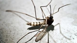 ALERTĂ! Constanța a înregistrat al 3-lea caz de infecție cu West Nile!