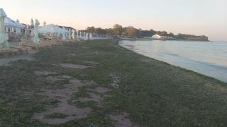 13.000 de tone de alge au fost strânse de pe litoral în acest sezon