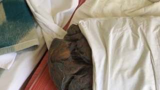 Incredibil! Turiști cazați în condiții mizerabile în Eforie Nord! Vezi foto!