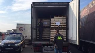 ANAF a dat amenzi de 1,6 milioane lei, în port