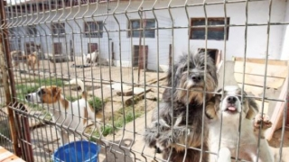 Angajări la Primăria Constanța. Se caută personal pentru Serviciul Gestionare Animale Abandonate