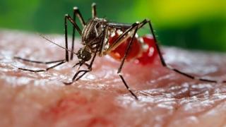Anticorpi pentru virusul Zika, testat pe oameni