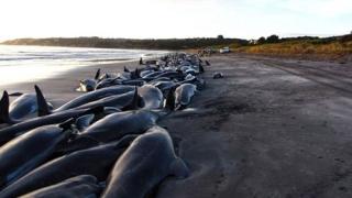 Zeci de balene au eşuat pe o plajă din Mexic. Doar trei au fost salvate