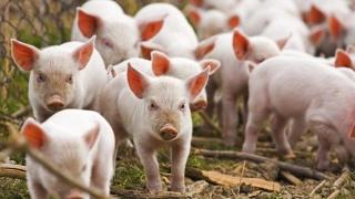 """APIA - Ghidurile Solicitantului pentru Măsura 14 – """"Bunăstarea Animalelor"""", aprobate!"""