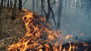 Incendiu VIOLENT de pădure! Peste 175 de pompieri au intervenit