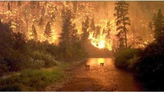 Ard pădurile în vestul Canadei. S-a instituit stare de urgență