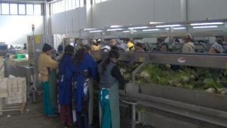 Arestări pe plantaţia din Ragusa, Sicilia, unde lucrează și români