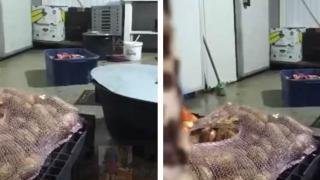 Mizerie și pește stricat într-un local din Vama Veche