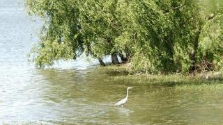 Aria protejată din zona Tașaul - Corbu nu va mai fi la fel. Vezi ce se schimbă