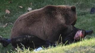 Atacaţi de urs, în centrul oraşului! Victime cu răni la picioare, piept şi în zona feţei