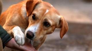 Au schingiuit și omorât un câine, dar au luat 8 luni de închisoare