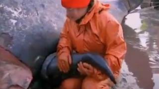 Balenă cenuşie, salvată după trei zile de chin