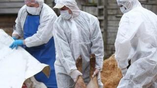 """""""Biosecuritatea în contextul evoluției Pestei Porcine Africane"""""""