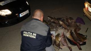 Razie în Delta Dunării. Au fost prinși la braconat cu mașina furată din Norvegia
