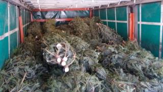 5.300 de brazi și peste 1.200 de metri cubi de lemn, confiscați de polițiști