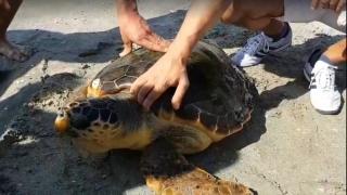 O broască țestoasă unică în România, descoperită la Vadu