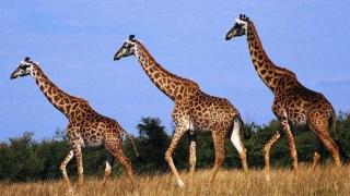 2.000 de animale vor fi donate de Zimbabwe țării vecine Mozambic