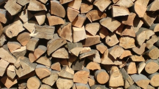 Individ cercetat pentru furt de lemne!