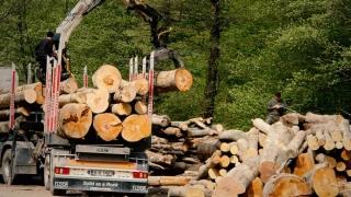 Concurența dă cu toporul în mafia lemnului