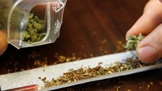 Polițiștii au confiscat 1.751 de kilograme de canabis