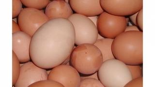 4 t de carne, 10 kg de ouă ş.a. puneau în pericol sănătatea constănţenilor